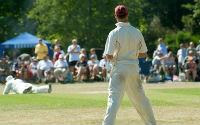 Cricket small